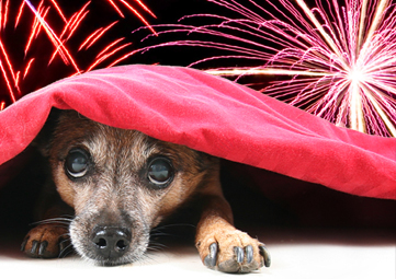 BC-SPCA-Fireworks